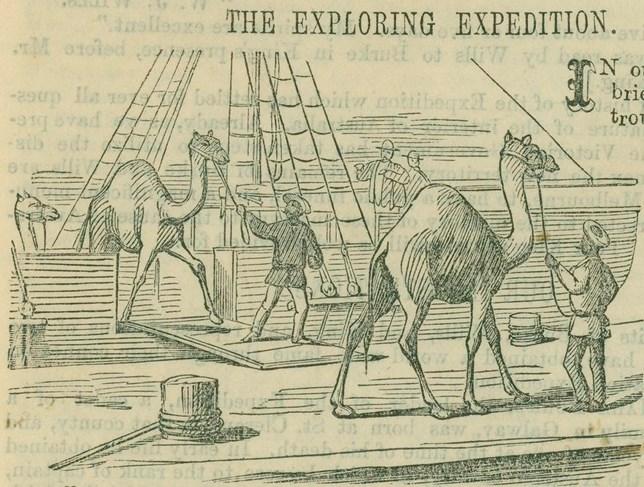camels_cropped.jpg